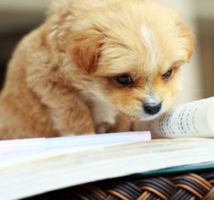 dogreading-book